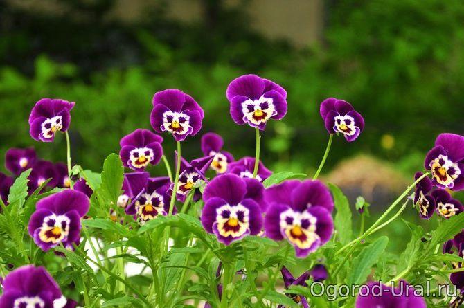 Цветы урала фото