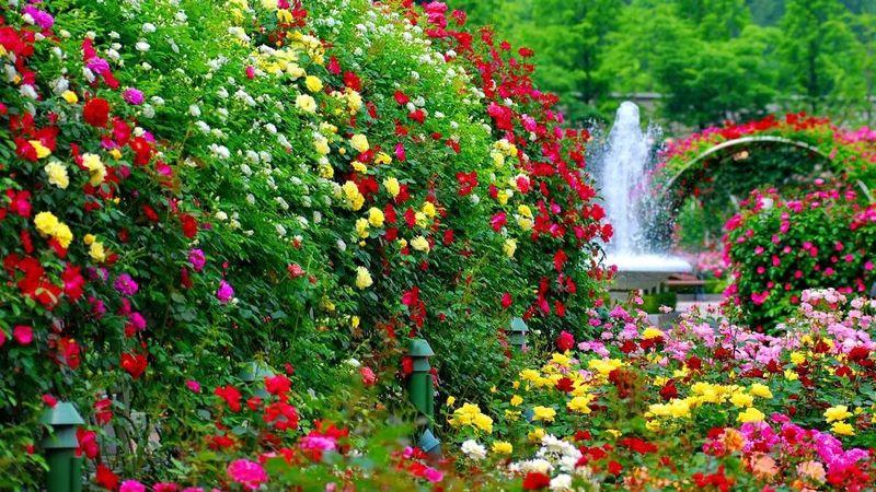 Купить семена цветов в интернет-магазине