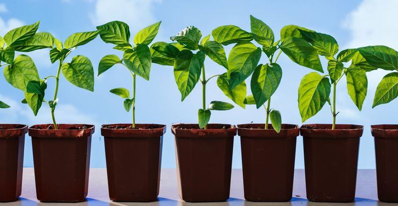 Когда сажать овощи. Сроки посадки семян основных 44